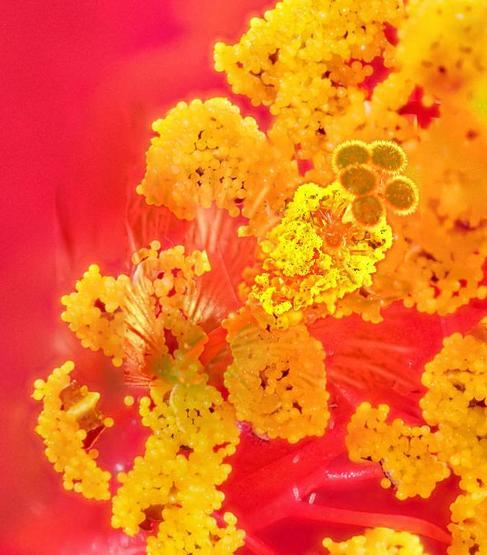 Hibiscus-3-detail.jpeg