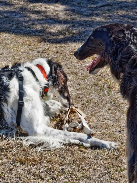 Dogs-with-bone-4.jpeg