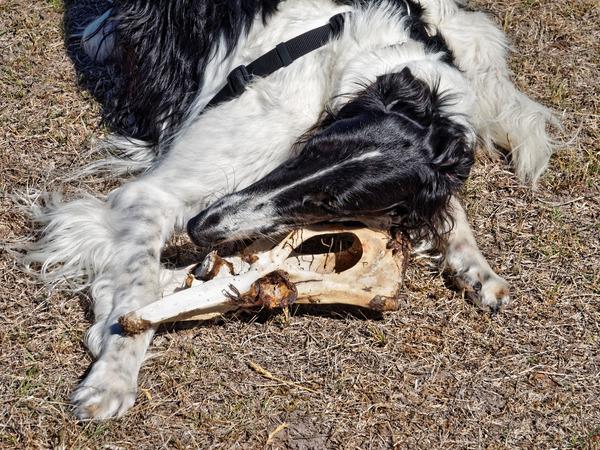Dogs-with-bone-5.jpeg