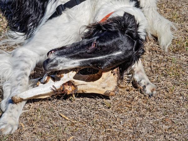 Dogs-with-bone-6.jpeg