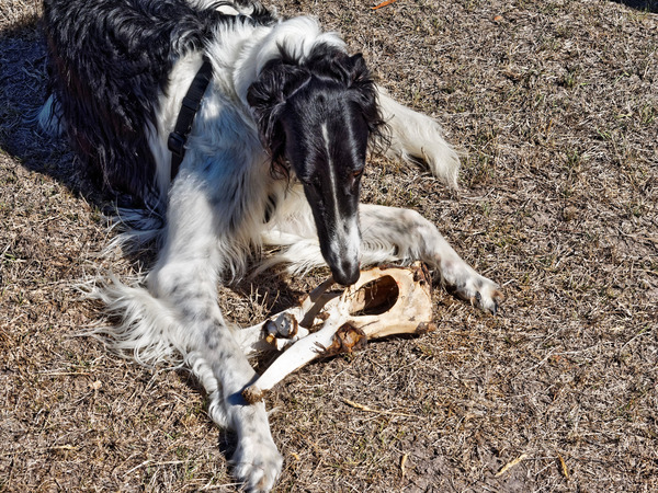 Dogs-with-bone-7.jpeg