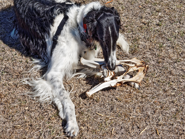 Dogs-with-bone-8.jpeg
