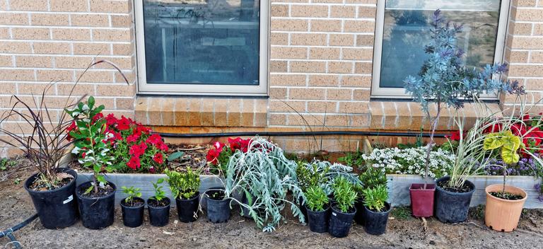 New-plants.jpeg