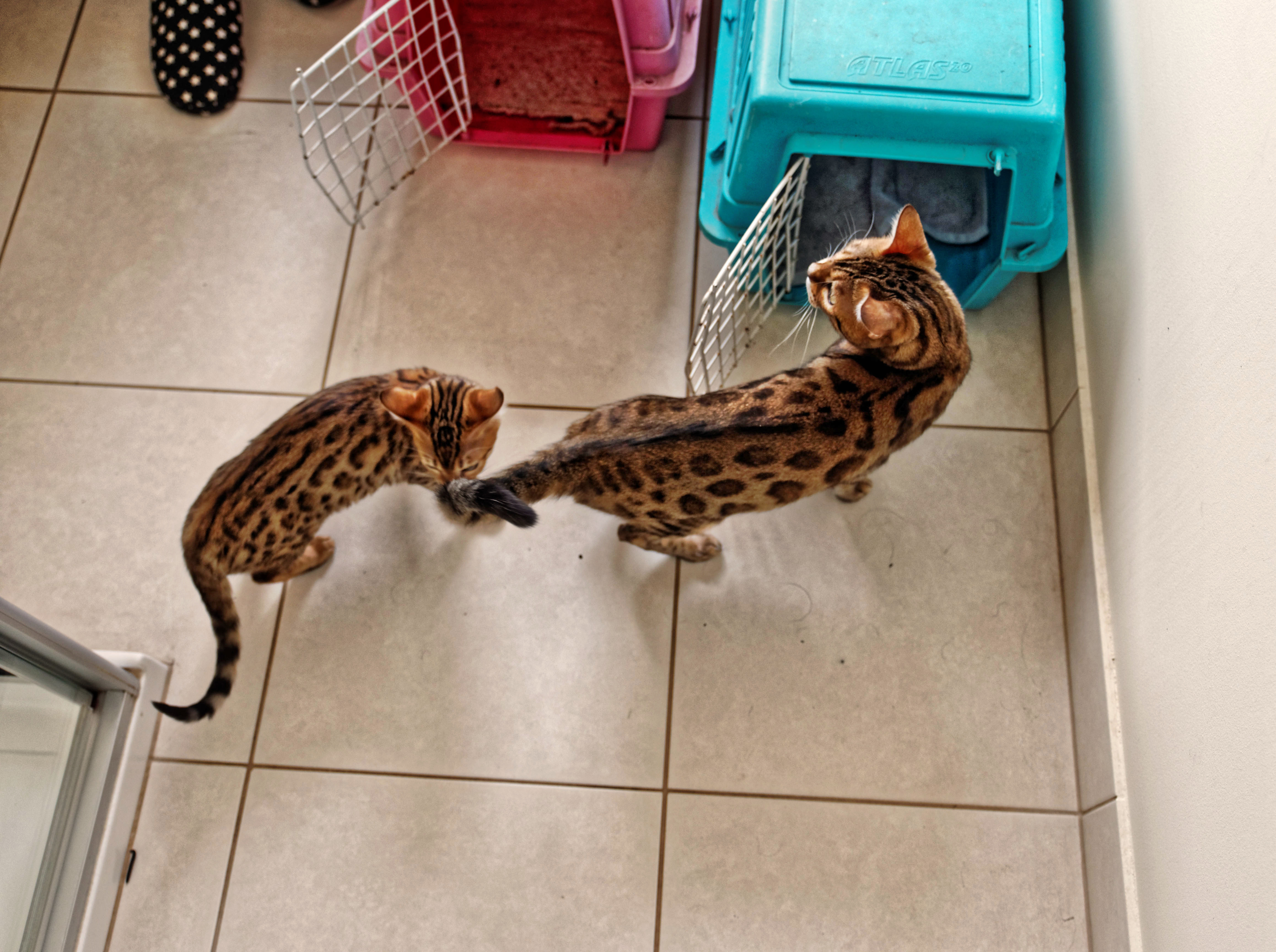 New-cats-6.jpeg