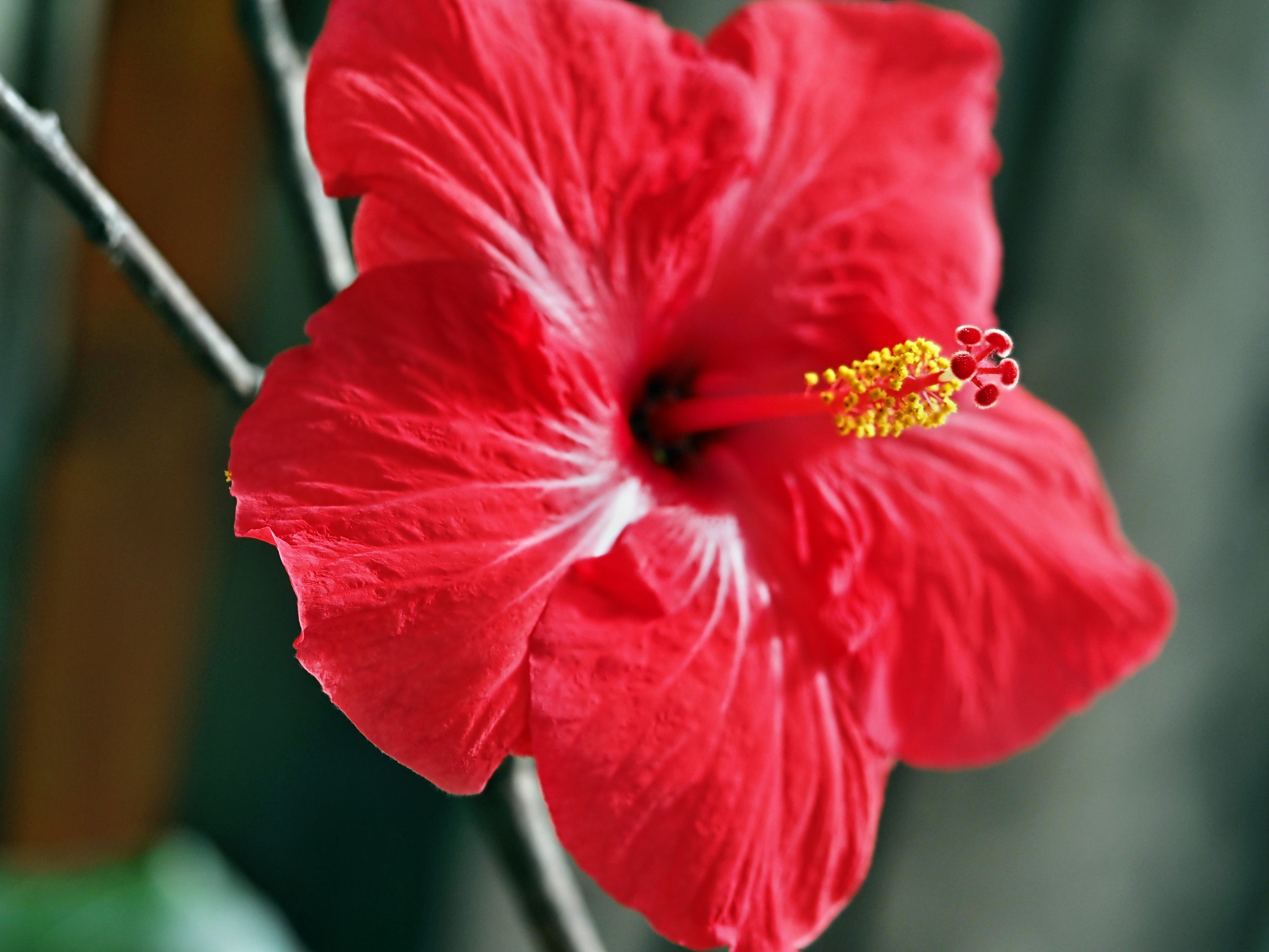 This should be Hibiscus-5.jpeg.  Is it missing?