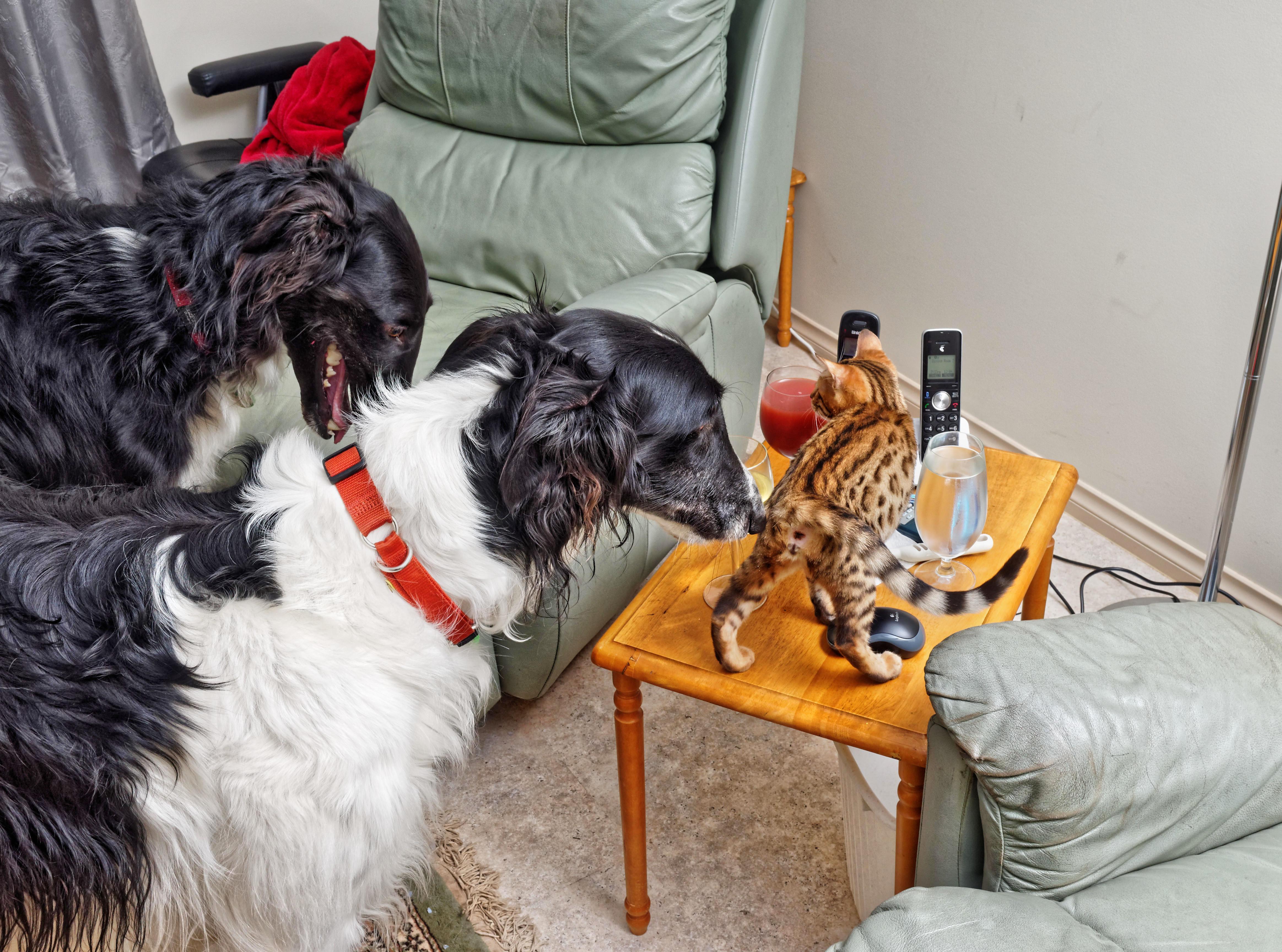 Dogs-and-Rani-19.jpeg