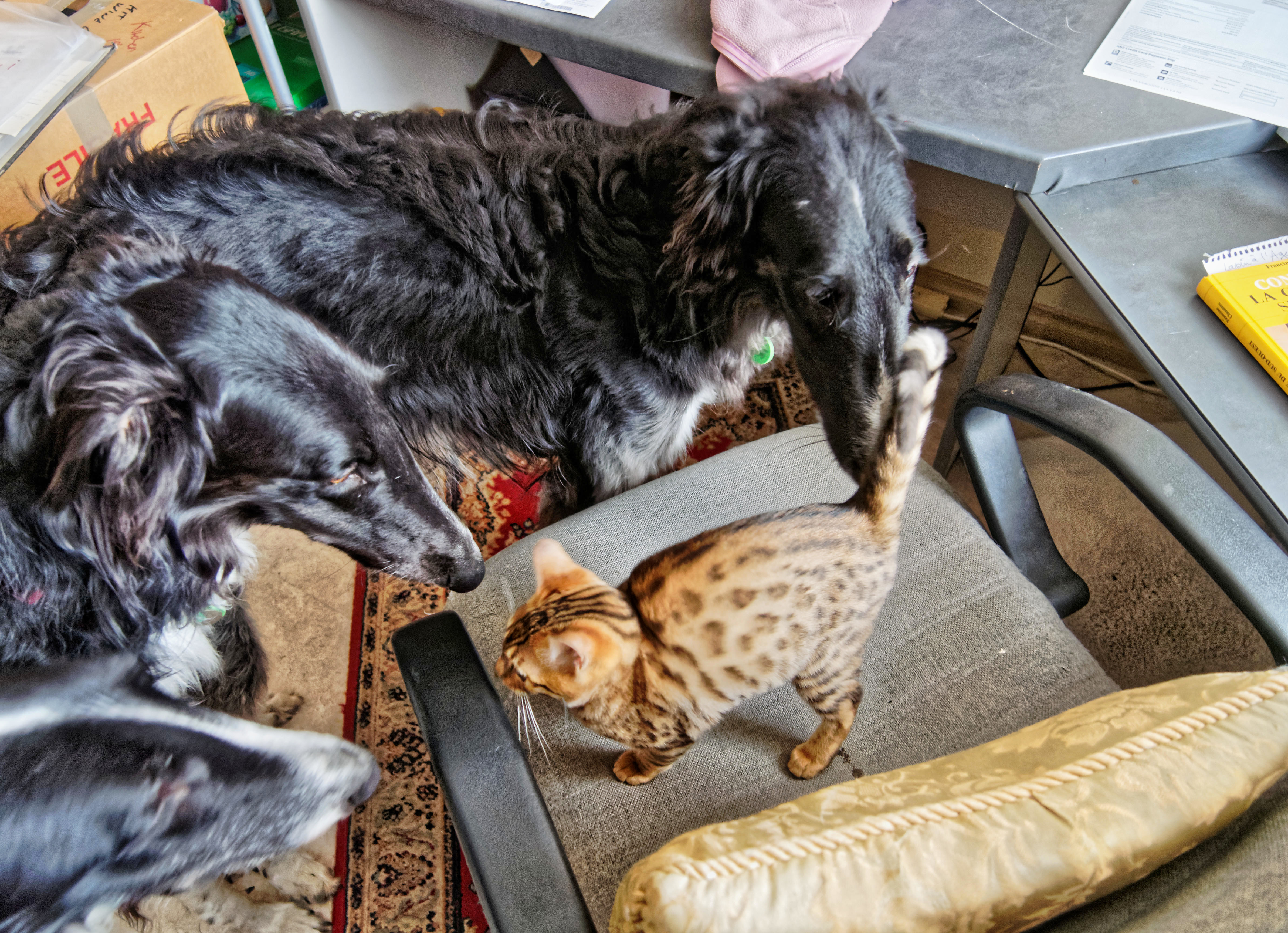 Dogs-and-Rani-2.jpeg