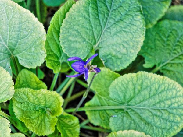 Violet-2.jpeg