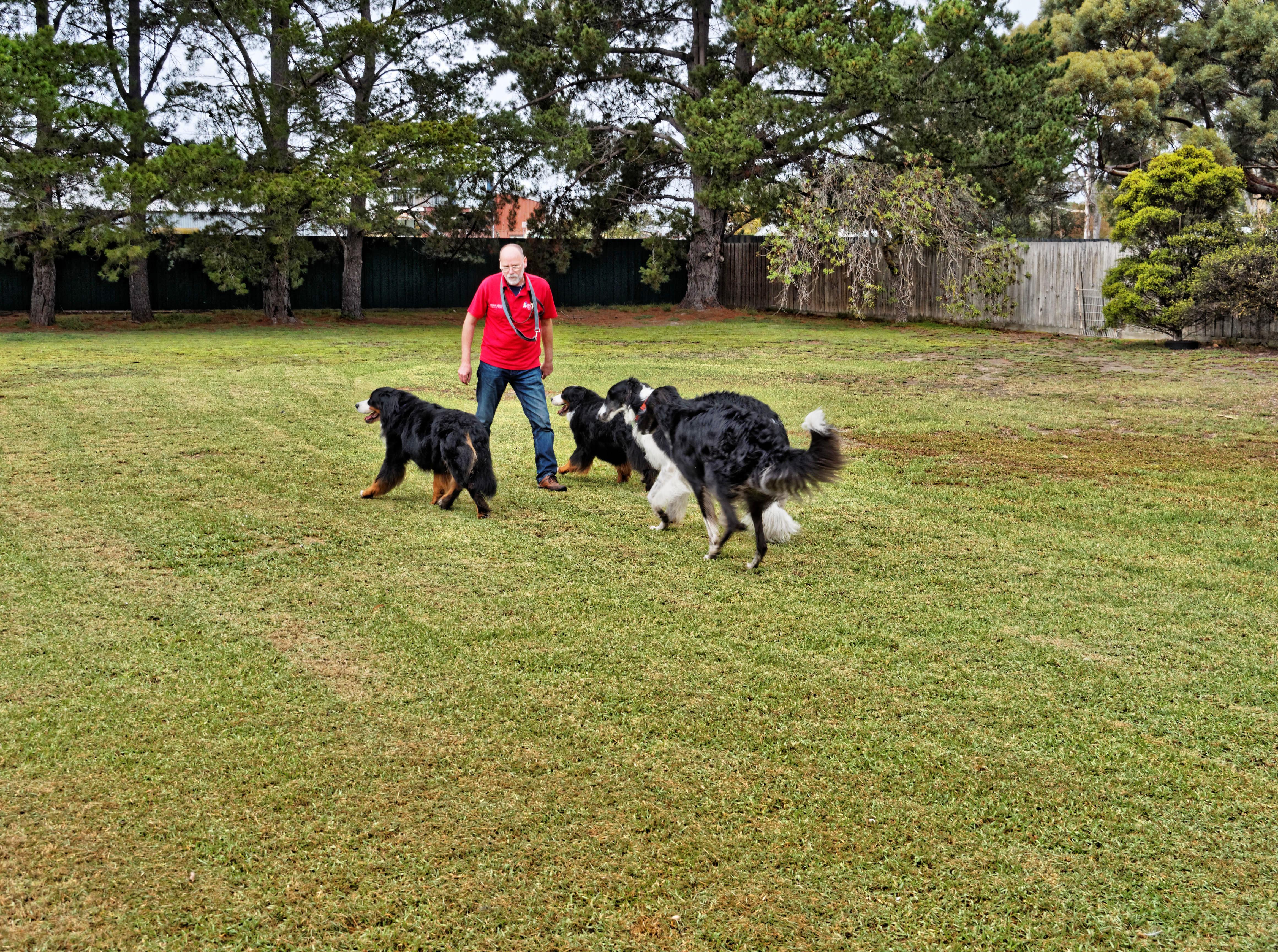 Dogs-playing-11.jpeg