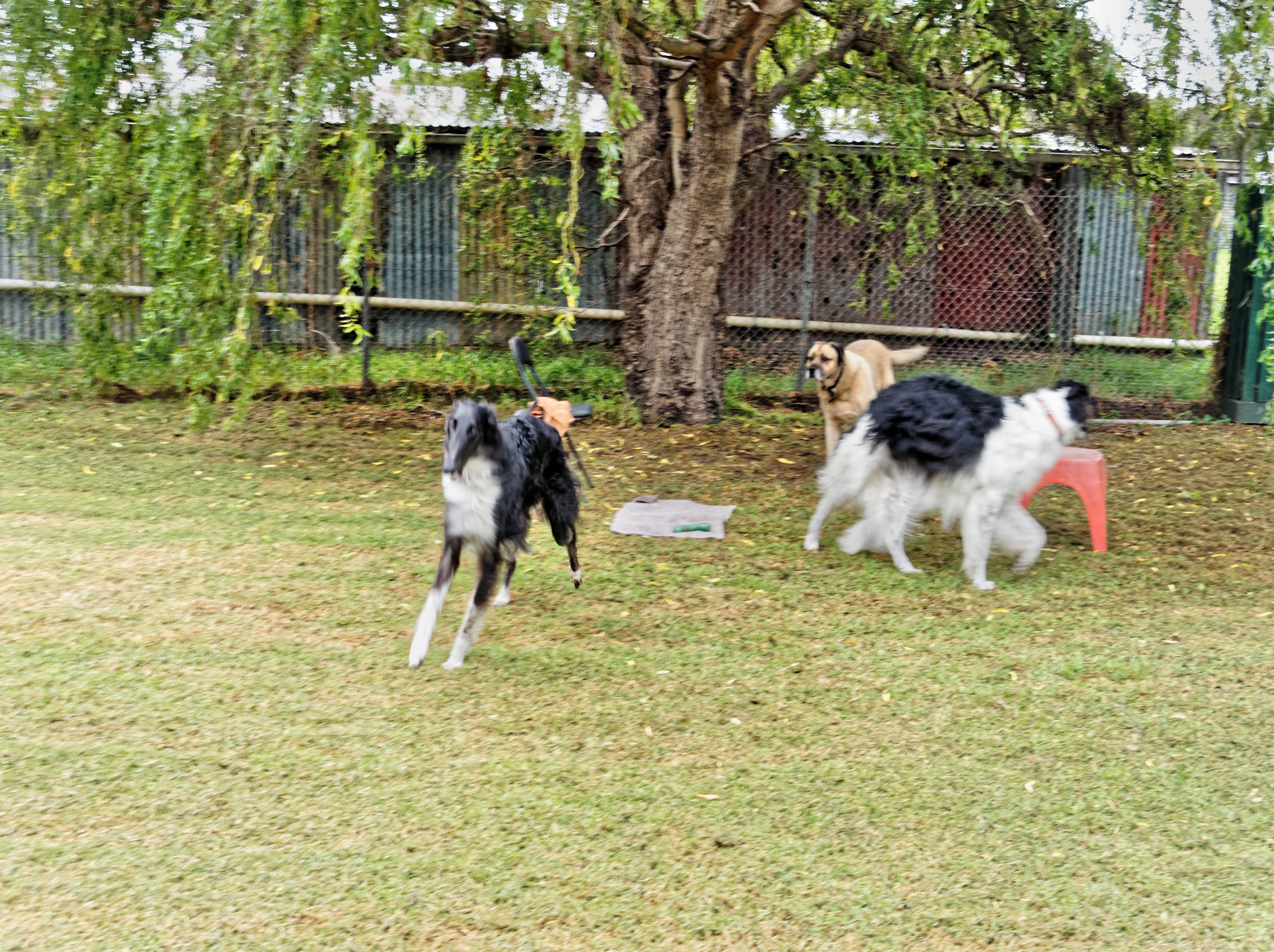 Dogs-playing-2.jpeg