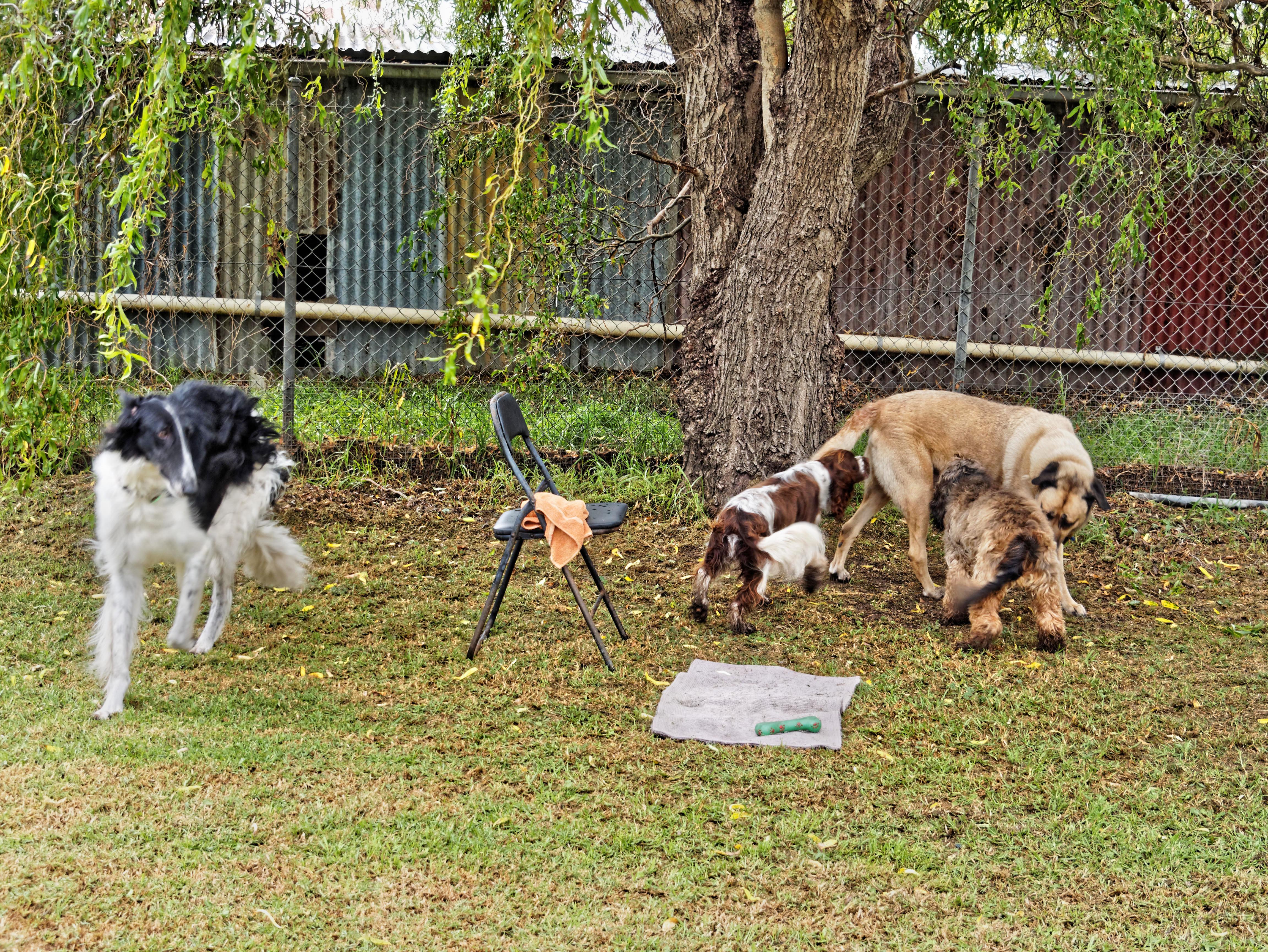 Dogs-playing-3.jpeg