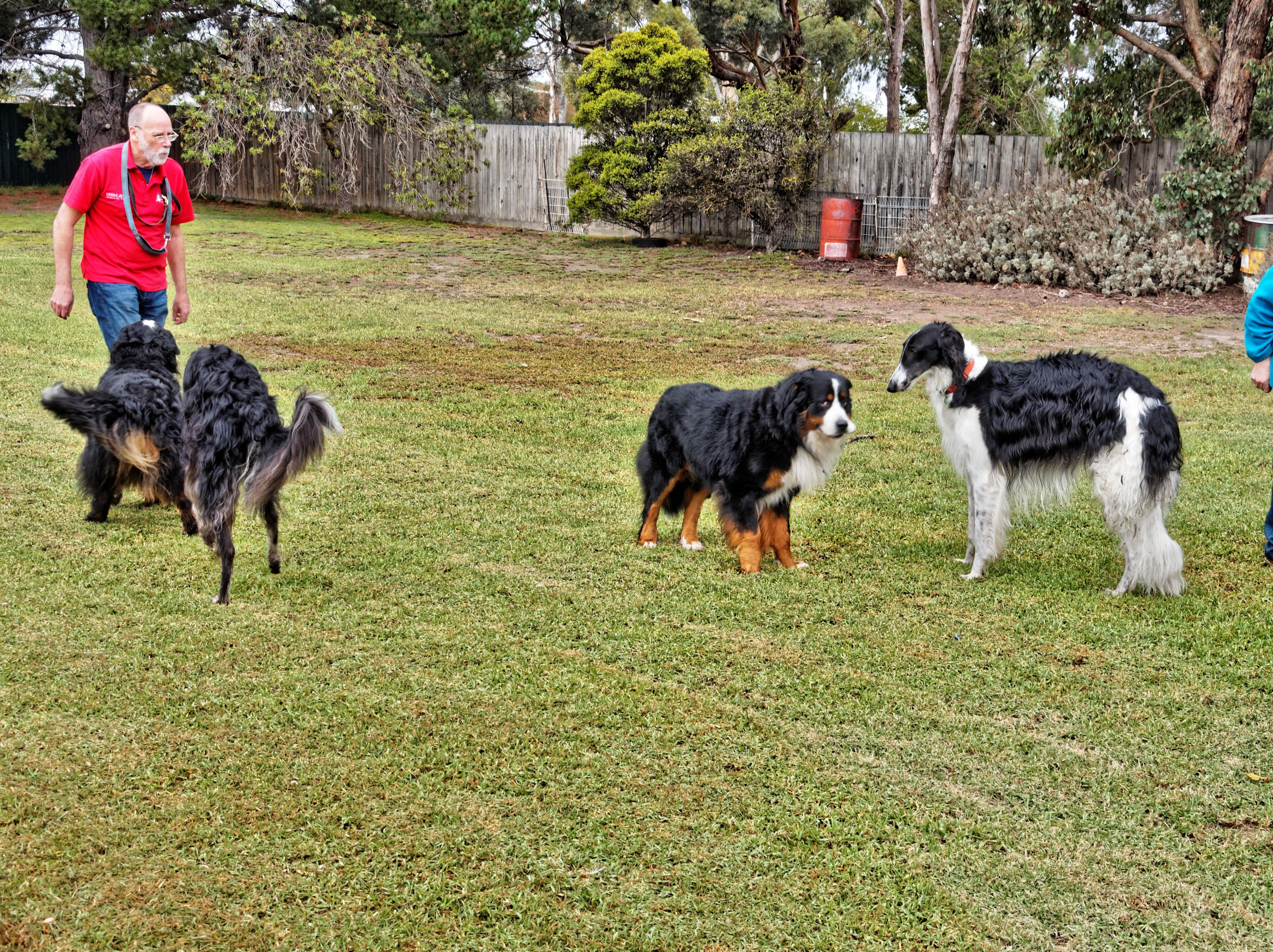 Dogs-playing-9.jpeg