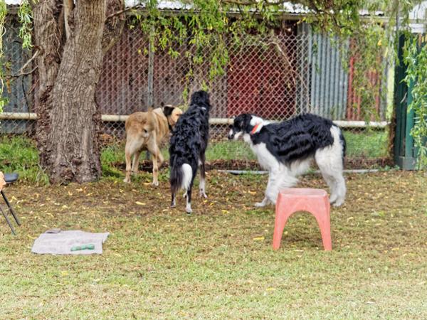 Dogs-playing-1.jpeg