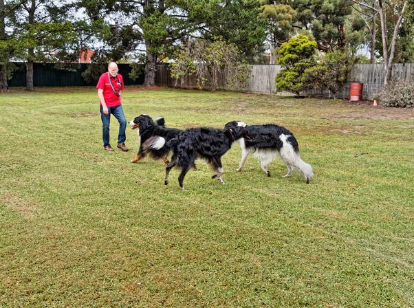 Dogs-playing-10.jpeg
