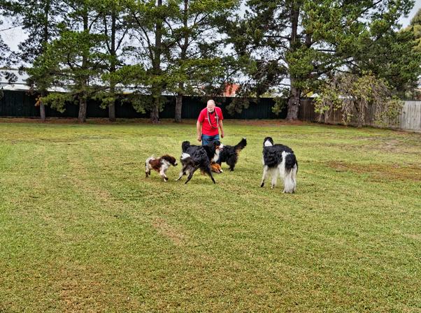 Dogs-playing-12.jpeg