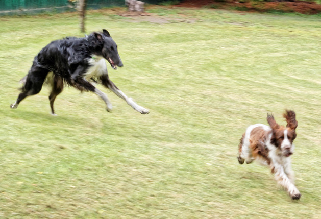 Dogs-playing-4.jpeg