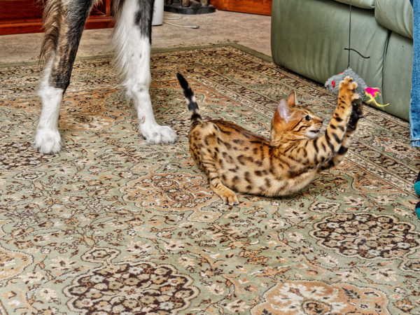 Cats-and-dogs-177.jpeg