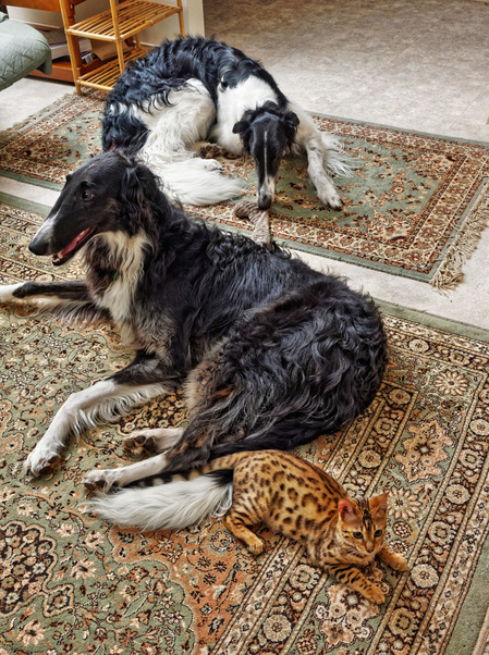 Cats-and-dogs-197.jpeg