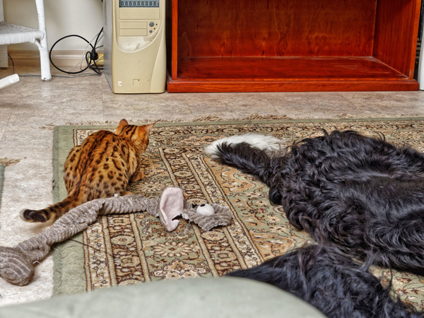 Cats-and-dogs-33.jpeg