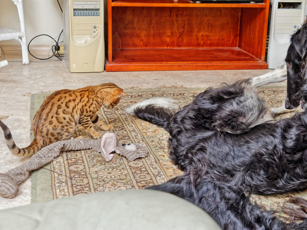 Cats-and-dogs-35.jpeg