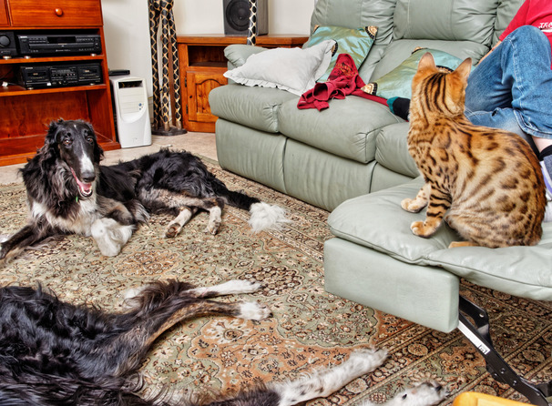 Cats-and-dogs-5.jpeg