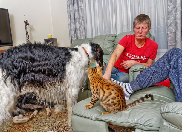 Cats-and-dogs-9.jpeg