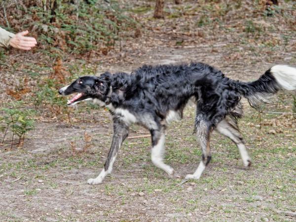Dogs-in-paddock-11.jpeg