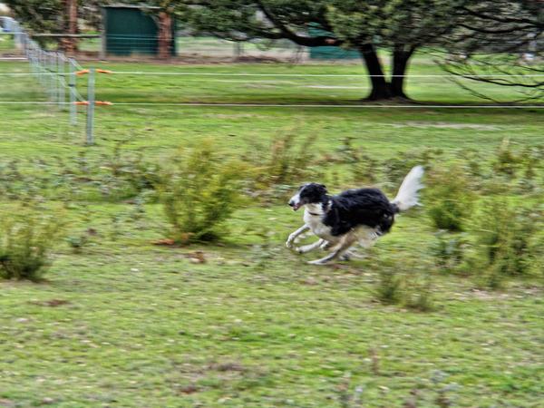 Dogs-in-paddock-14.jpeg