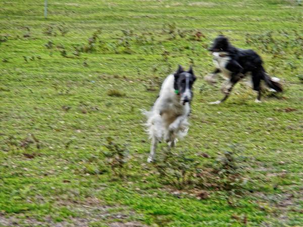 Dogs-in-paddock-15.jpeg