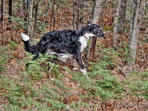 Dogs-in-paddock-16.jpeg
