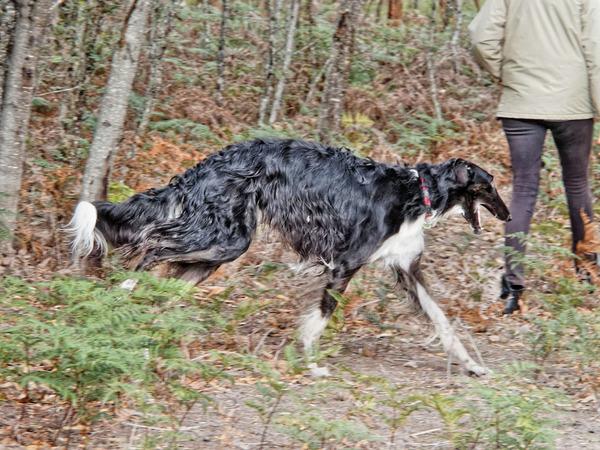 Dogs-in-paddock-17.jpeg