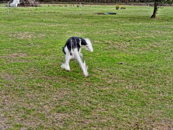 Dogs-in-paddock-2.jpeg