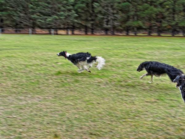 Dogs-in-paddock-3.jpeg