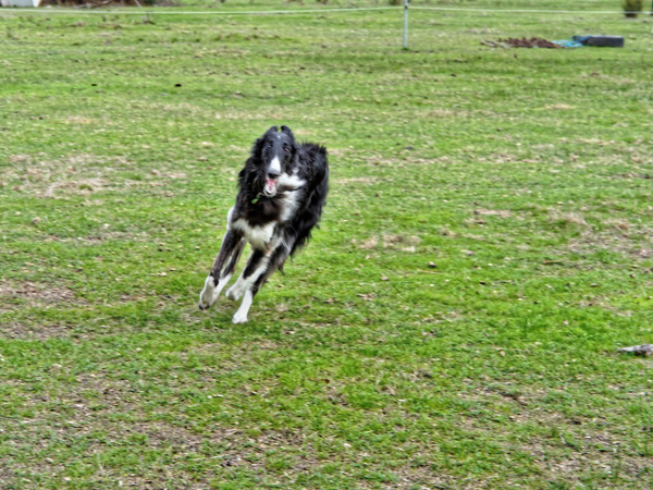 Dogs-in-paddock-5.jpeg