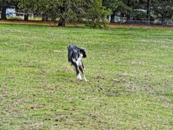 Dogs-in-paddock-7.jpeg