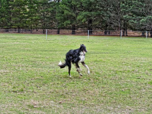 Dogs-in-paddock-8.jpeg