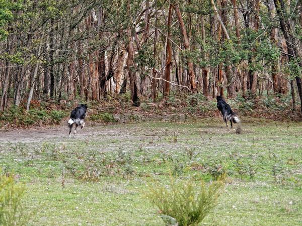 Dogs-in-paddock-9.jpeg