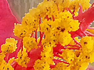 Hibiscus-1-full-detail-2.jpeg