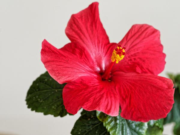 Hibiscus-HDR-1.jpeg