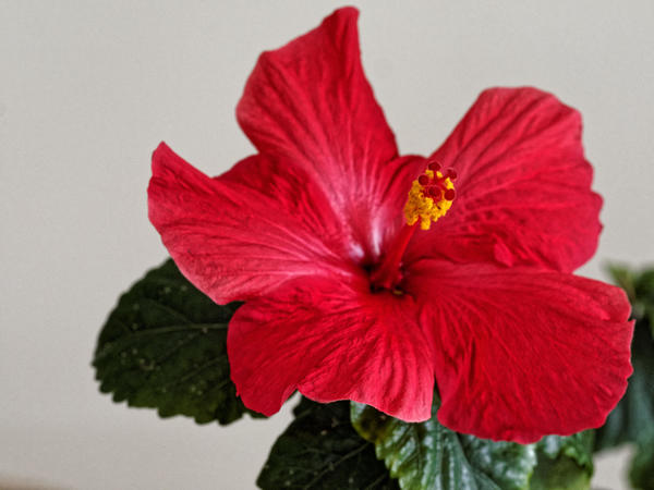 Hibiscus-HDR-2.jpeg