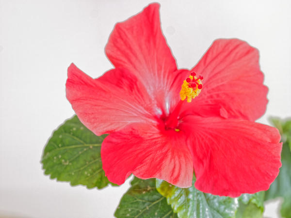 Hibiscus-HDR-3.jpeg