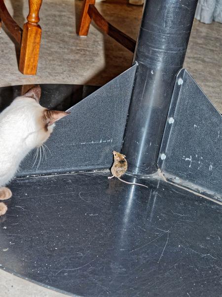 Piccola-mouse-10.jpeg