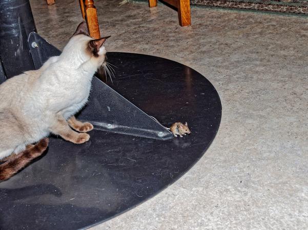 Piccola-mouse-11.jpeg