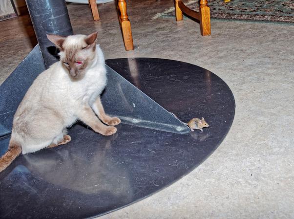 Piccola-mouse-12.jpeg