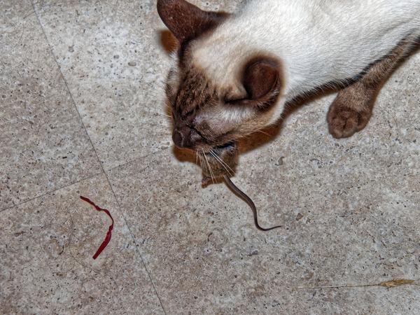 Piccola-mouse-6.jpeg