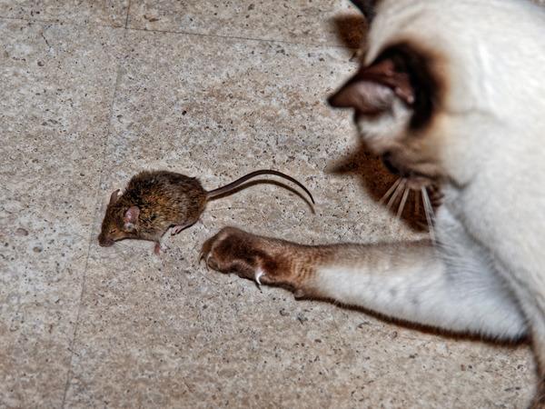 Piccola-mouse-9.jpeg