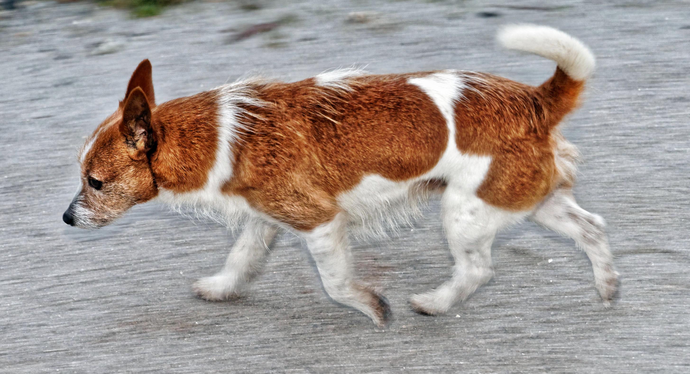 Lost-dog-7.jpeg