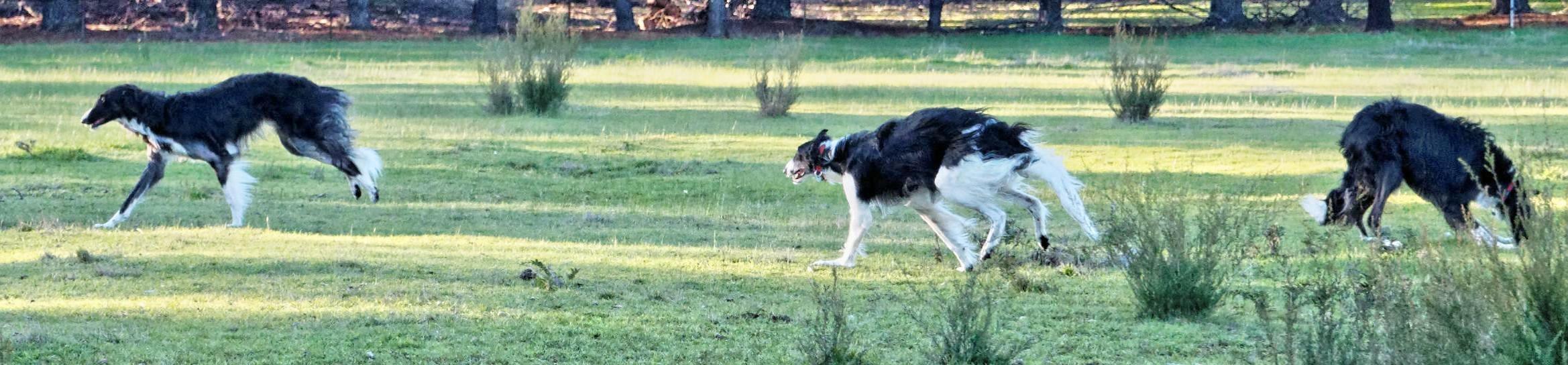 Dogs-12.jpeg