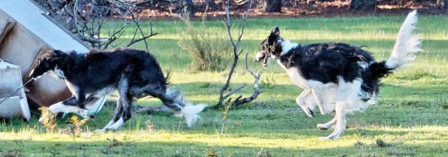 Dogs-13.jpeg