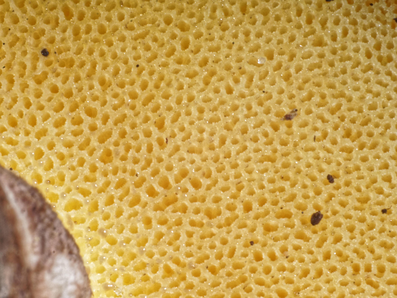 Mushroom-13.jpeg